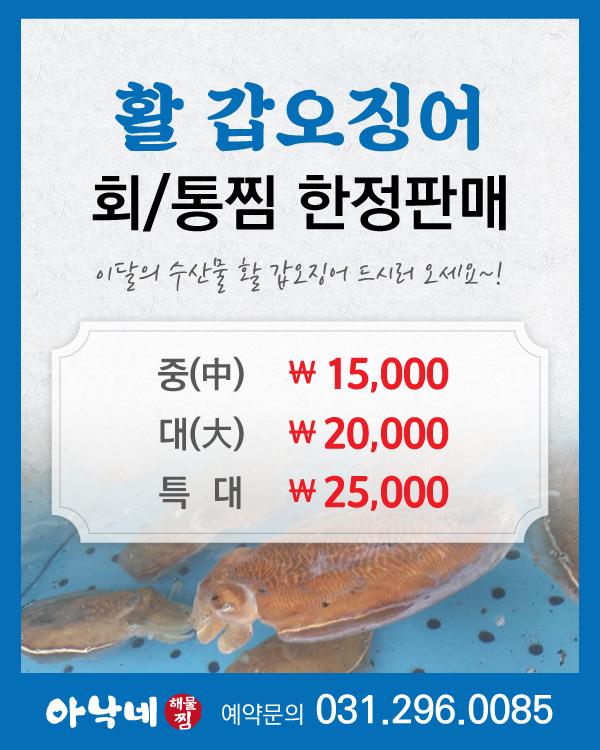 활 갑오징어 회/통찜 한정판매